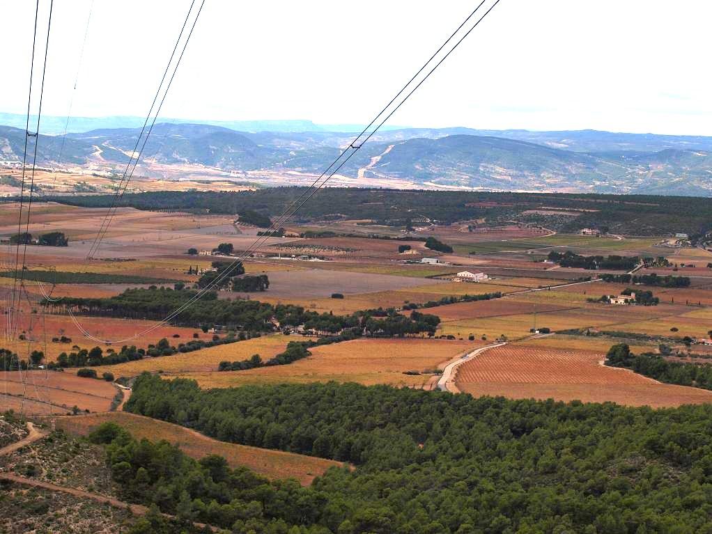 Viñedos en Els Alforins