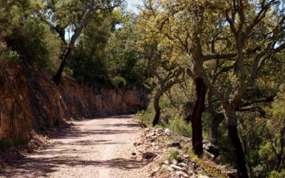 El Alcornocal de la Sierra de Espadán