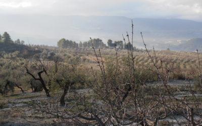Los Paisajes de la Vall de Ceta