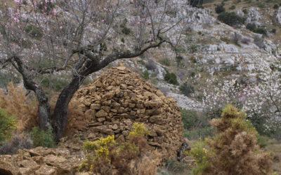Almendros en Flor (Albocasser)